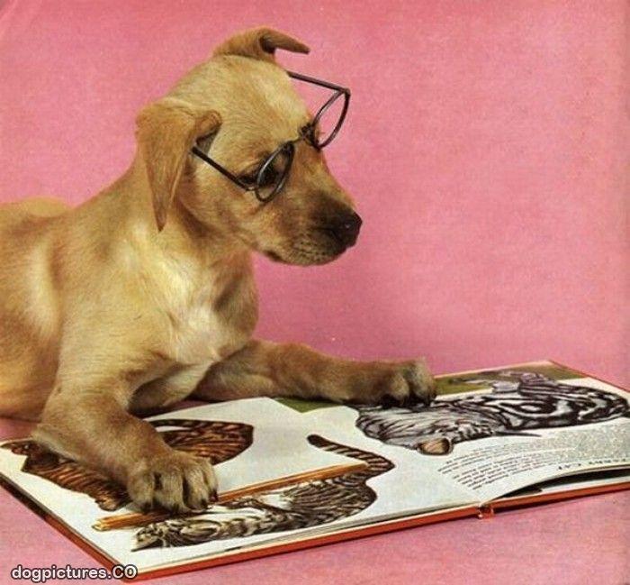 dog reading 5