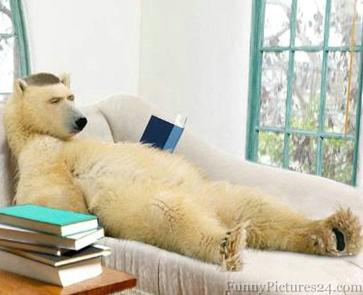 Funny Poloar Bear Reading