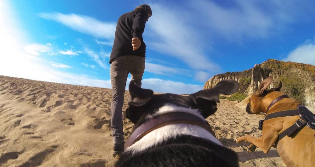 GoPro Dog Mounts