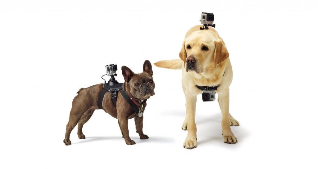 go_pro-dog-mount