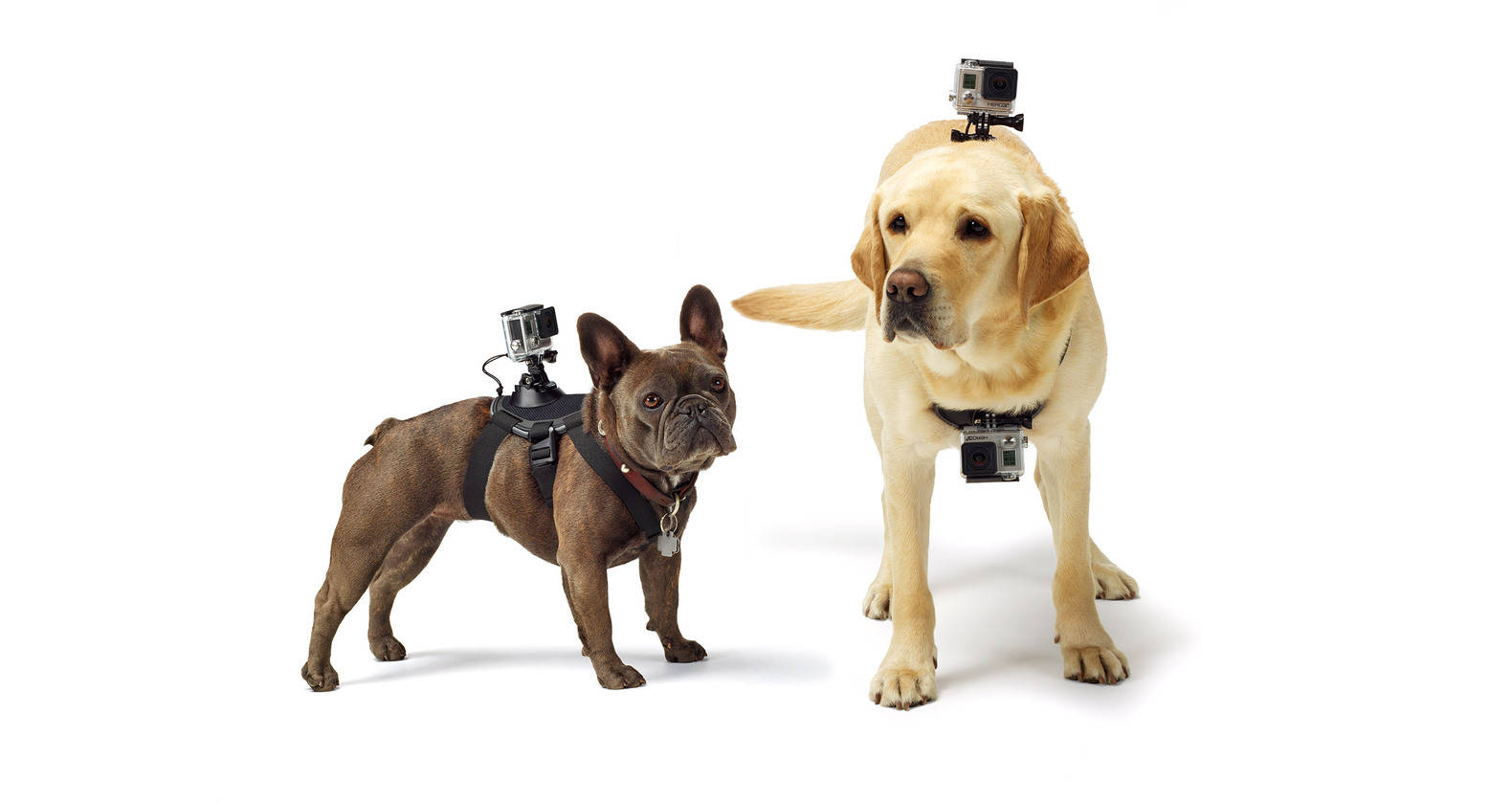 GoPro Mount for dogs