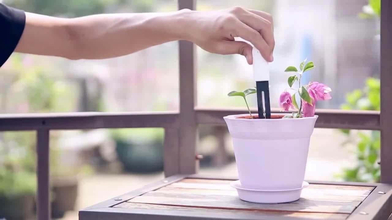xiaomi plant monitor