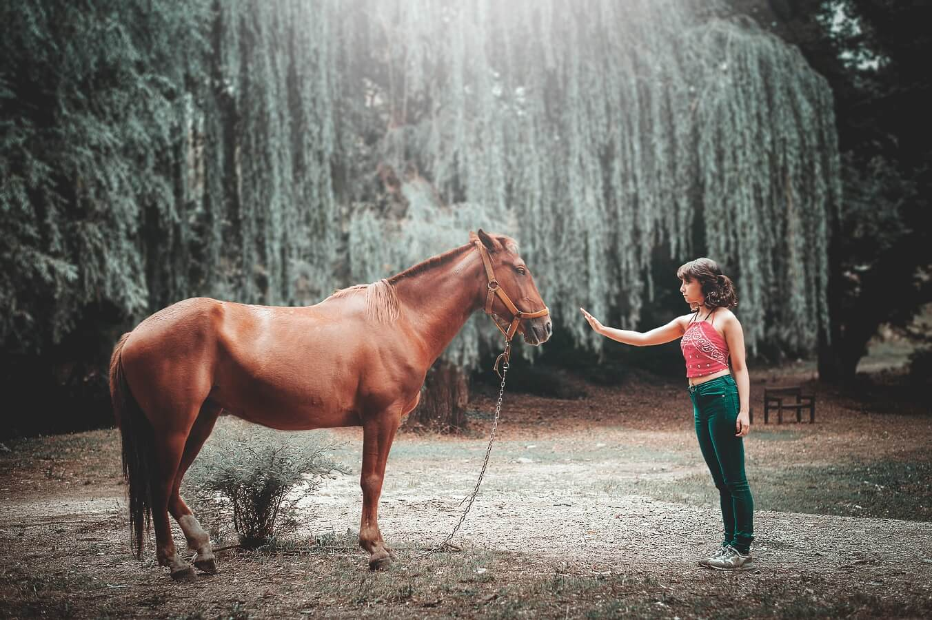 horse and woman