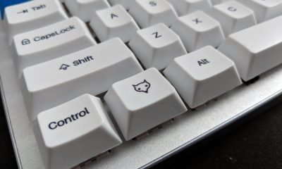 whitefox fox key