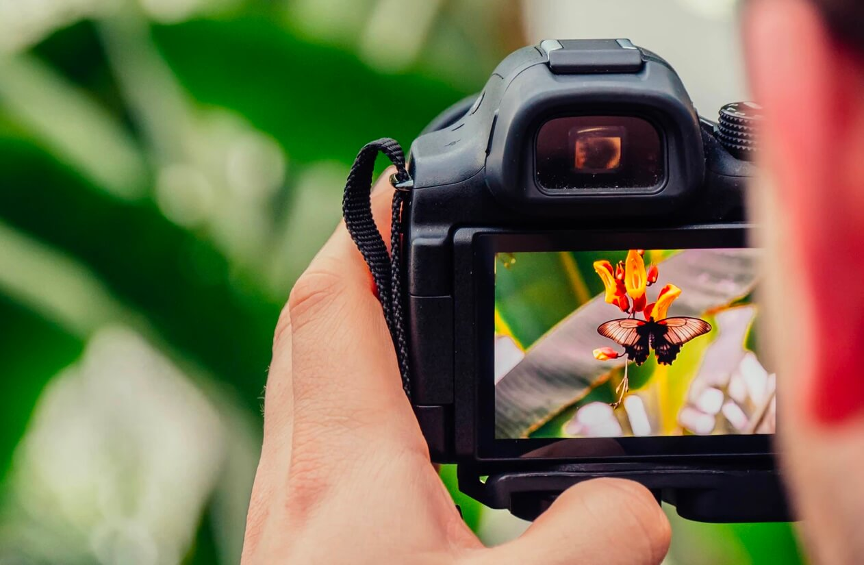 flickr taking photo of butterfly