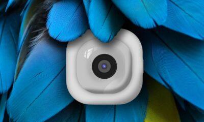 pocketcam against blue feathers