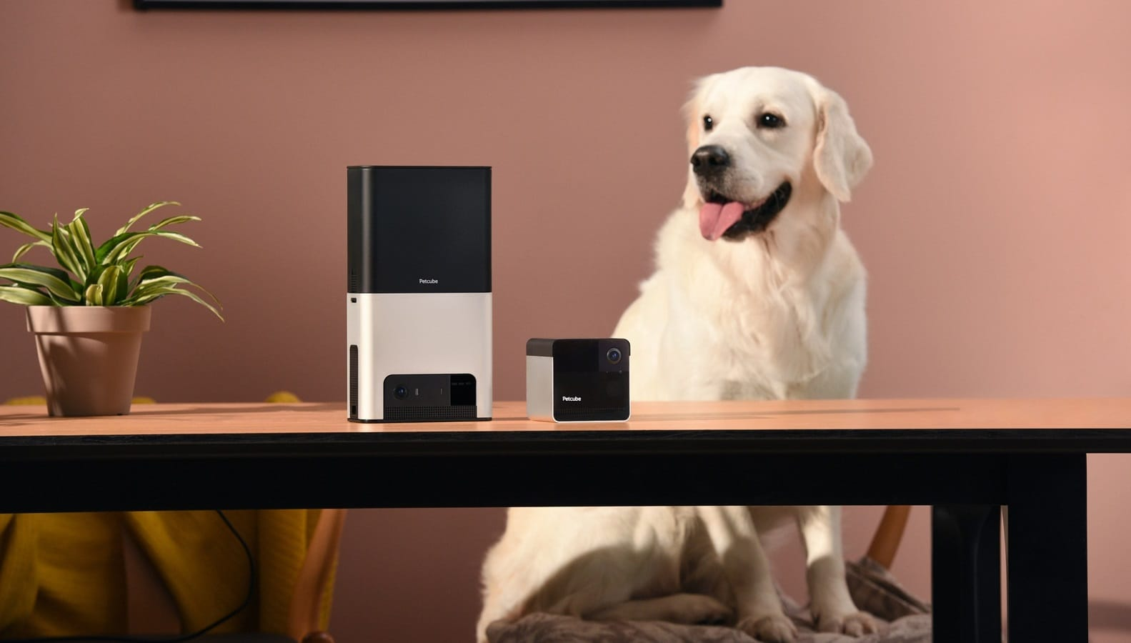 petcube smart monitors on table with dog in background