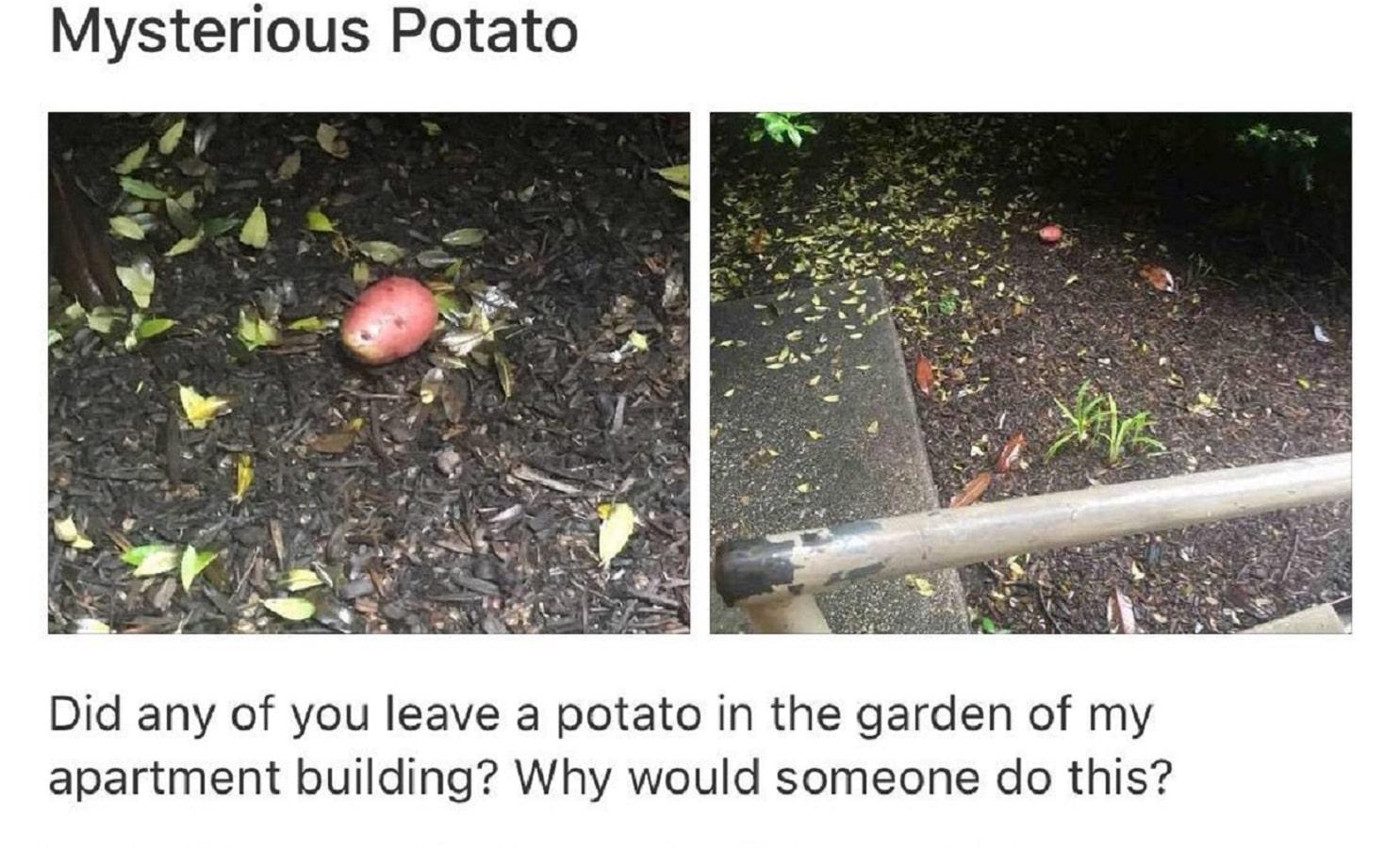 best of nextdoor post about potatoes