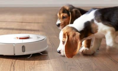 robotic vacuum with beagle puppies