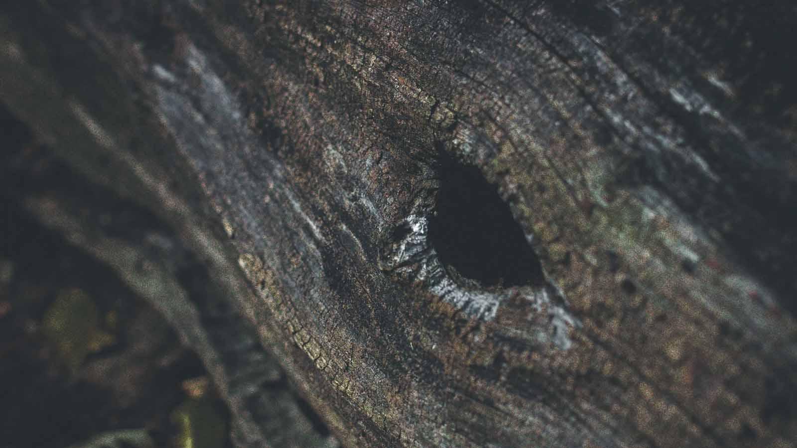 glory hole in tree