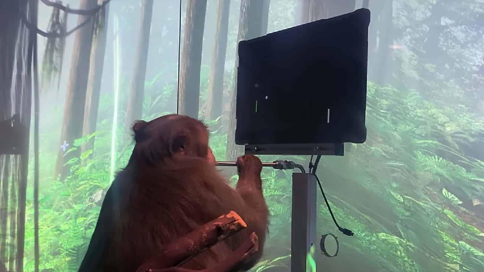 neuralink pong-playing monkey