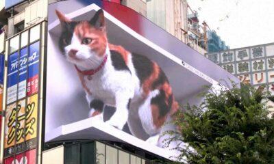 digital billboard cat in japan